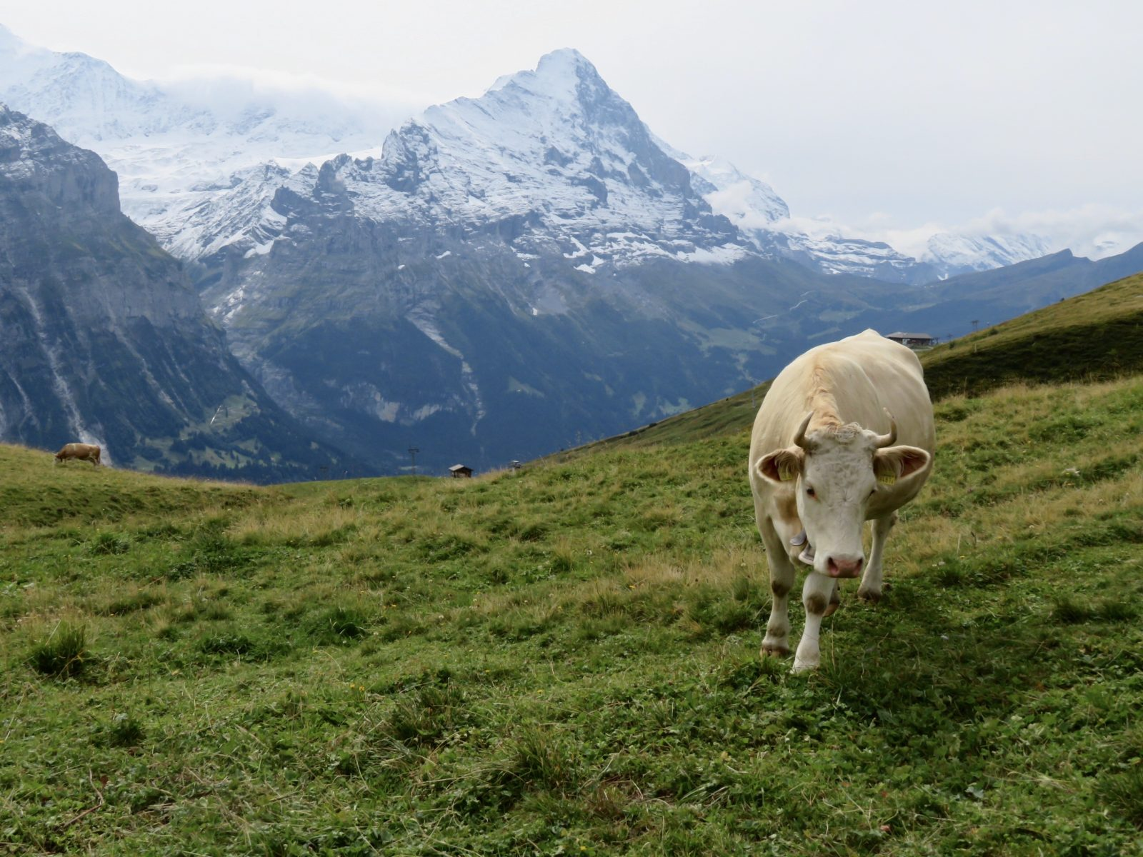 Grosse Scheidegg to First